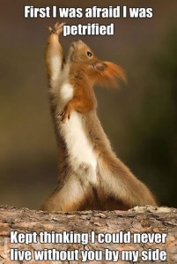 funny-dramatic-squirrel-acting