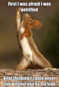 funny-dramatic-squirrel-acting